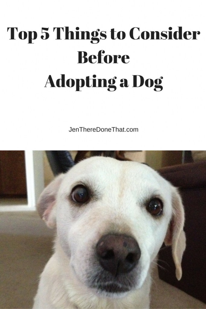 top-5-things-to-consider-before-adopting-a-dog