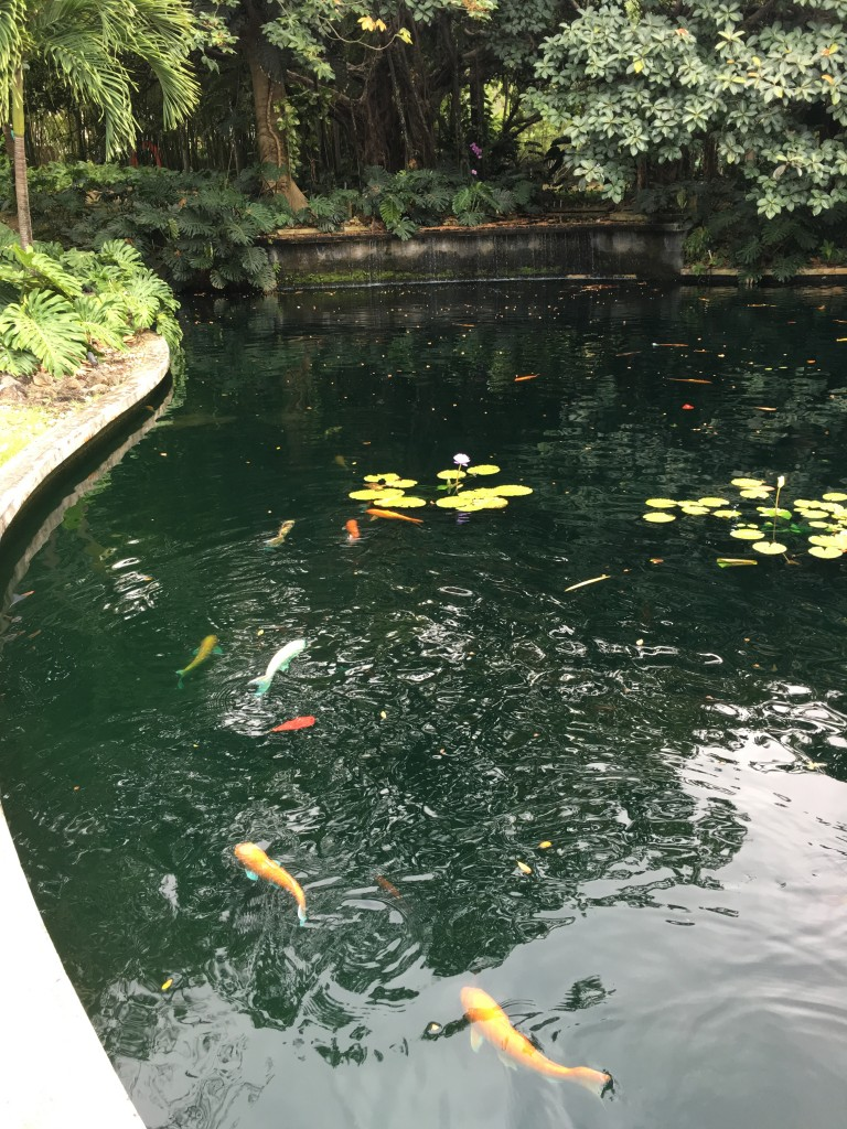 Koi fish pond at the Museum Garden