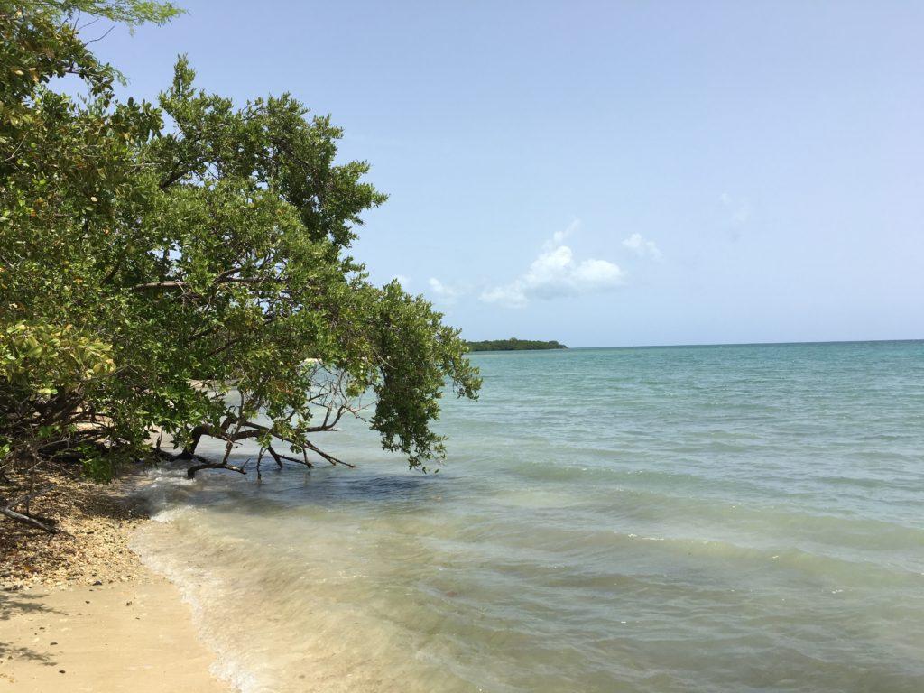 Ceiba Roosevelt Roads Mangrove beach