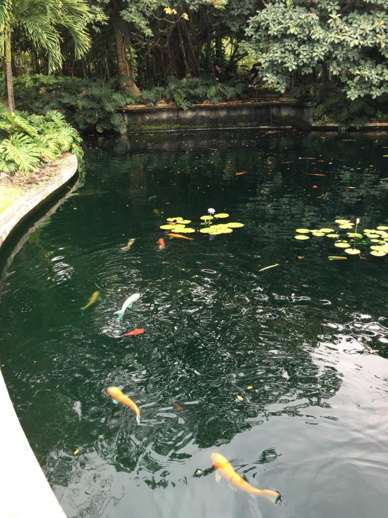Museo de Arts Puerto Rico Garden Koi Pond